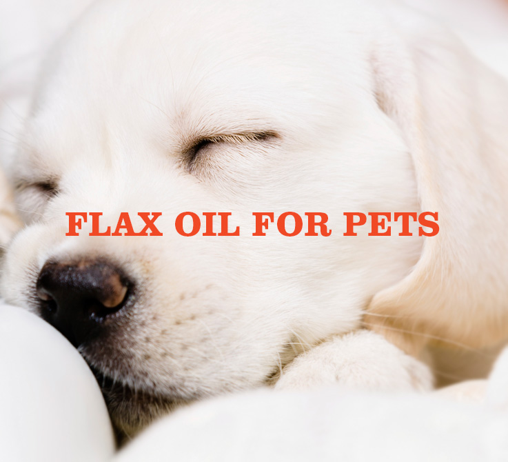 flax-oil-for-pets